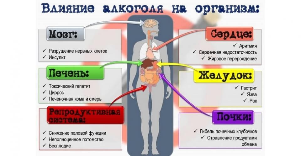 влияние алкоголя на организм фото